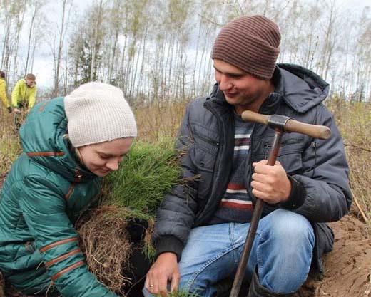 Посадка деревьев - спасение чистого мира