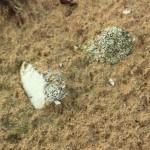 Урочище-пески 4