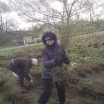 Посадка деревьев - спасение чистого мира 2